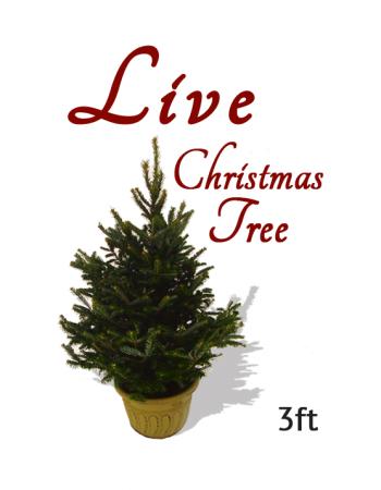 live-christmas-tree2