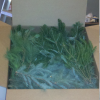 Box of Mixed Greens