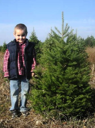 3ft-Balsam-Fir
